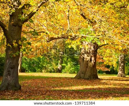 Autumn trees in the Royal Botanic Gardens in London - stock photo