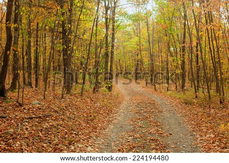 Autumn trees lining rough road in wilderness setting