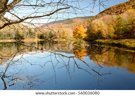 Autumn trees on a Vermont Pond near the end of the fall season on a gorgeous fall day