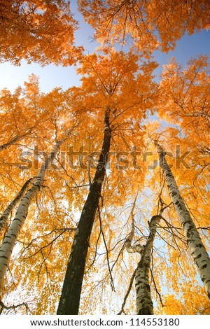 Autumn trees with yellowing leaves against the sky - stock photo