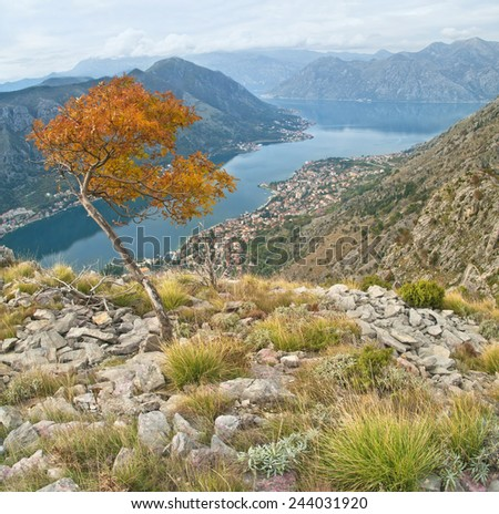 autumn view of fjords and Kotor city from mountain top, Montenegro - stock photo