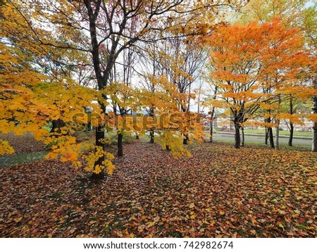 autumn view with beautiful  maple leaves