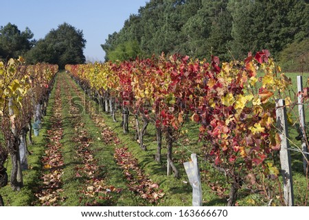 Autumn vineyard landscape in Bordeaux Valley, France - stock photo