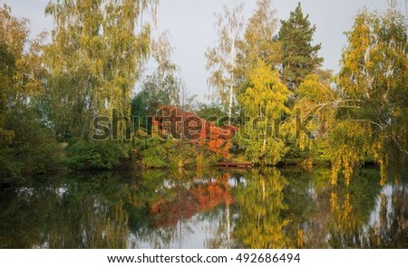 Autumn Water Yellow Forest Tree