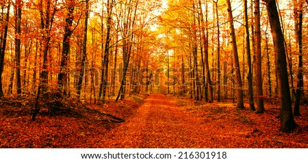 Autumn way - stock photo