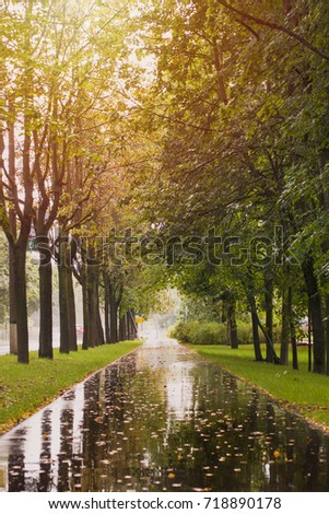 Autumn wet rainy weather in park. Path with yellow leaves in puddles