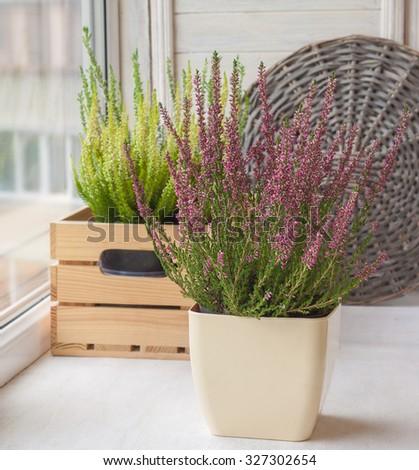Autumn window decoration with heather - stock photo