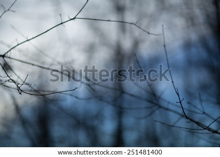 Autumn, winter forest background at sunset with blue sky - stock photo