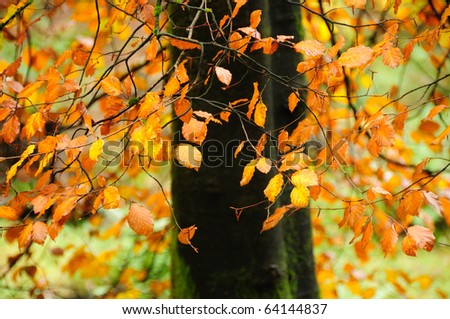 Autumn woodlands in the English Lake District - stock photo