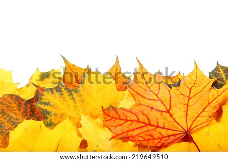 Autumn yellow and red leaves isolated on white background. - stock photo