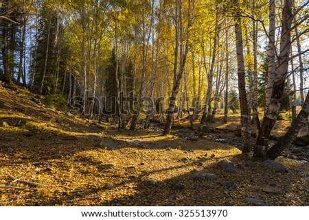 Autumn Yellow Forest