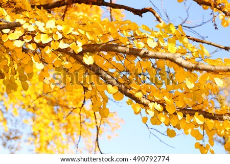Autumn Yellow Leaves. Fall Background