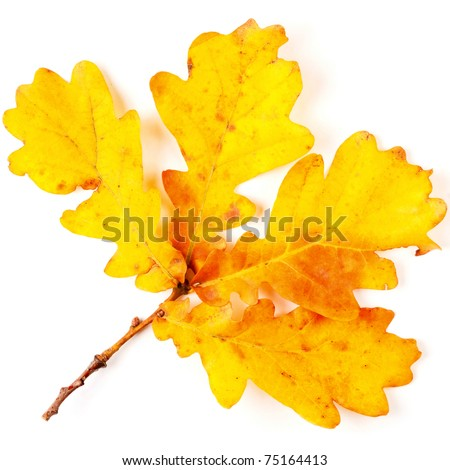 Autumn yellow leaves isolated on white background - stock photo