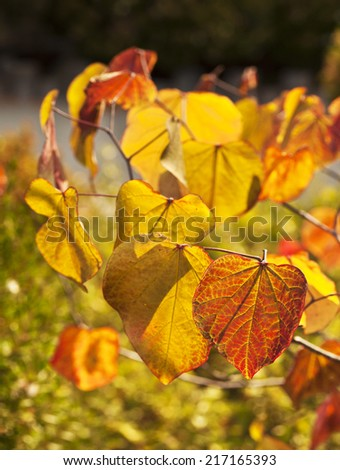 autumn yellow leaves, very shallow focus, macro photography