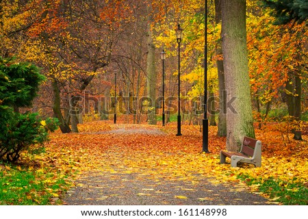 Autumnal alley in the park, Poland - stock photo