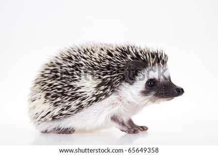 Autumnal animal, Hedgehog - stock photo