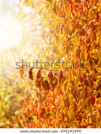 autumnal background with colorful leaves in the forest