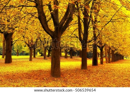 Autumnal chestnut trees in the park