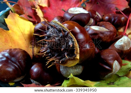 Autumnal colourful vibrant seasonal leaves from trees on black background - stock photo