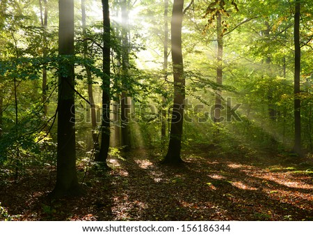 Autumnal dawn in old beech forest - Poland