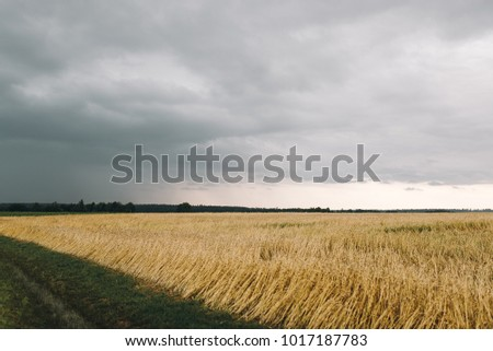 Autumnal field and sky