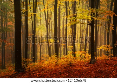 Autumnal foggy day into the forest - stock photo