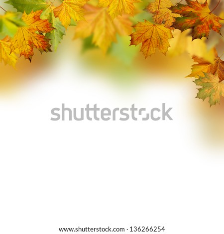 Autumnal foliage against white backgrounds - stock photo