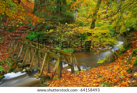 Autumnal forest - stock photo