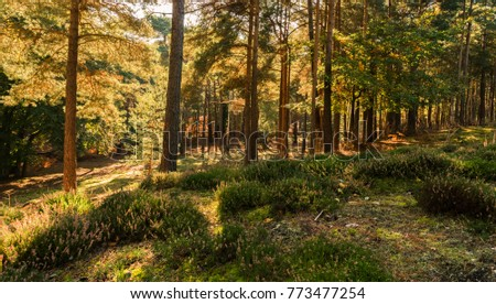 Autumnal forest at Brownsea