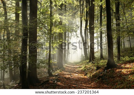 Autumnal forest in the mountains with mist in the distance. - stock photo