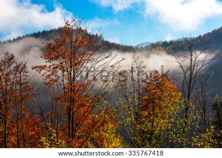 Autumnal Forest Landscape with Red Orange and Yellow Colors of Trees Blue Sky Clouds and Fog Running Down - stock photo