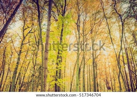Autumnal forest landscape with vintage mood filter. Fall forest in vintage colors.