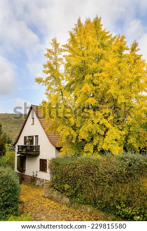 autumnal ginkgo biloba house and blue sky with clouds - stock photo