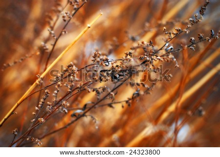 Autumnal grass