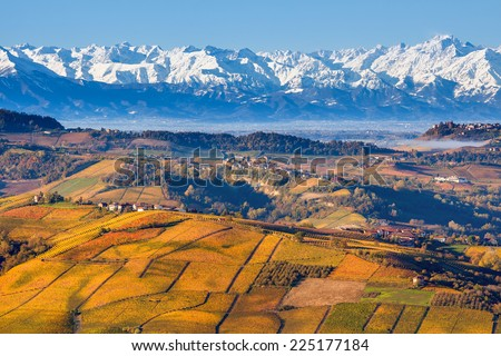 Autumnal hills with yellow and orange vineyards and snowy mountain ridge on background in Piedmont, Northern Italy. - stock photo