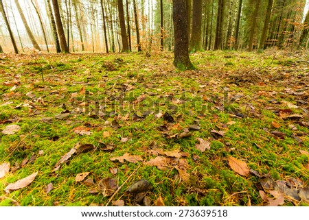 Autumnal landscape. Close up view on the mossy ground in autumn forest covered with fallen golden leaves - stock photo
