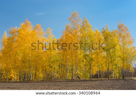 Autumnal landscape with a birch grove on an edge of agricultural field - stock photo
