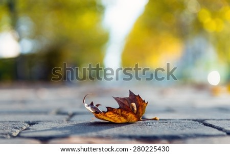 Autumnal leaf on the ground at the road - stock photo