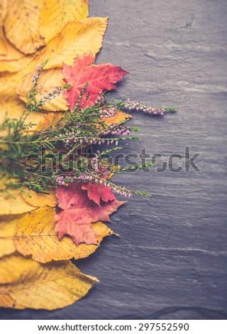 autumnal leaves background. vintage backgroud - stock photo
