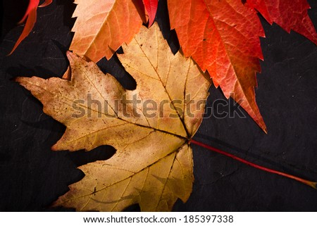 Autumnal leaves composition l - stock photo