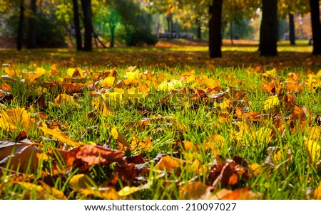 Autumnal leaves in the park. Natural background.