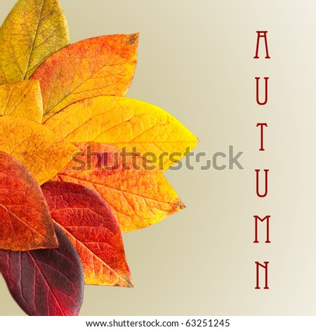 Autumnal leaves isolated on a green background.