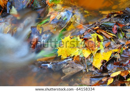 Autumnal leaves lying in a stream. A slow shutter speed was used to give the water its smooth appearance.