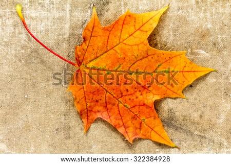 Autumnal maple leaf on grunge cloth texture - stock photo