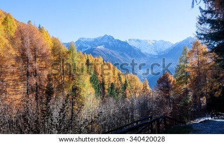 Autumnal Panorama with colourful leaves and mountains
