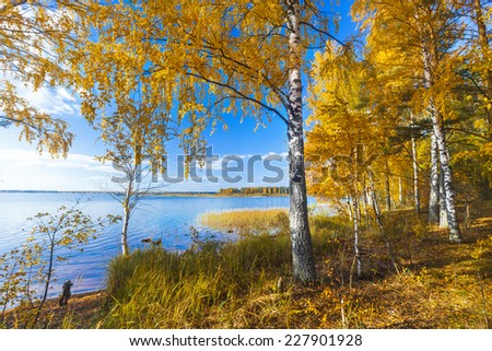 Autumnal Park. Autumn Trees and lake - stock photo