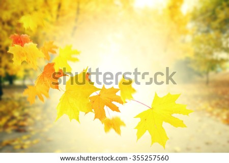Autumnal park with falling maple leaves