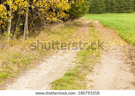 autumnal path - stock photo