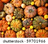 Autumnal pumpkins, harvest - stock photo