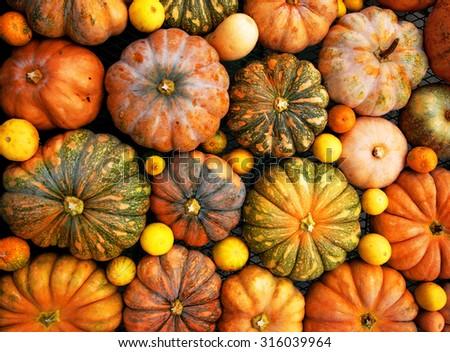 Autumnal pumpkins, harvest, texture or background, many small vegetals, pumpkin - stock photo